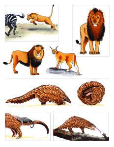Africa. Animals 1-01