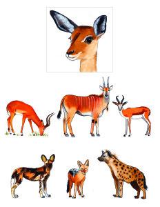 Africa. Animals 2-01