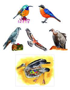 Africa. Birds-01