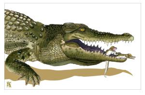 croc mum