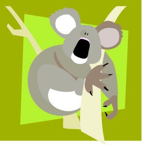 koala 1 copy